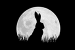 Watership Down hops onto the small screen