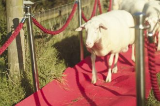World First Sheep Premiere Held to Celebrate the Release of A Shaun The Sheep Movie: Farmageddon