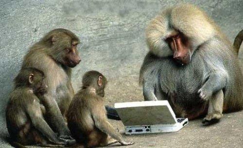 real-code-monkey