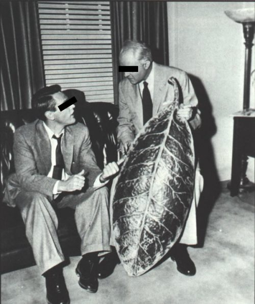 Proof of the Government 50s pod people experiments