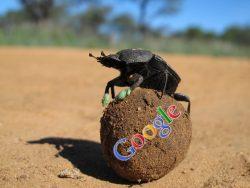 Google Dung Beetle