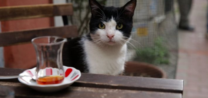 KEDi – What does your cat get up to?