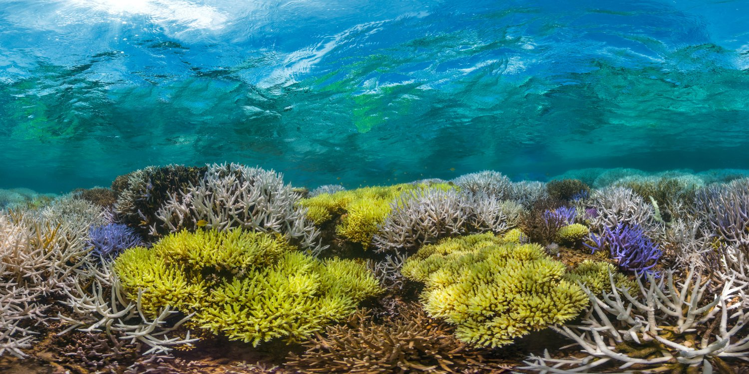 Chasing Coral image 03