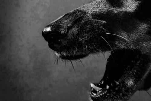 The Dandy Devil Dogs of Devon