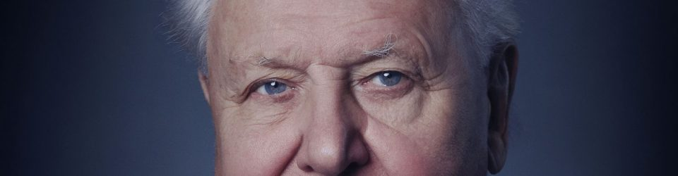 Find out about A Life On Our Planet with David Attenborough